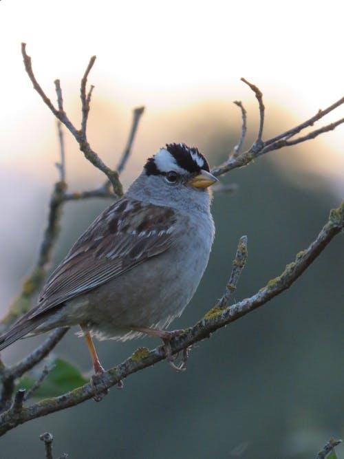 Free stock photo of animal, avian, bird