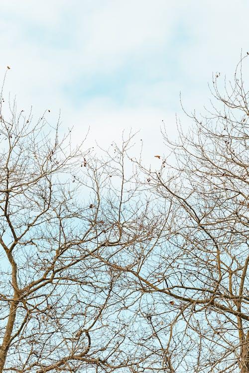Ảnh lưu trữ miễn phí về bình minh, cao nhất, cây, chi nhánh