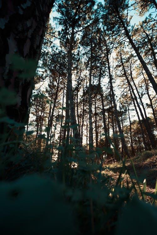 Ảnh lưu trữ miễn phí về ánh sáng, ánh sáng ban ngày, bình minh, cây