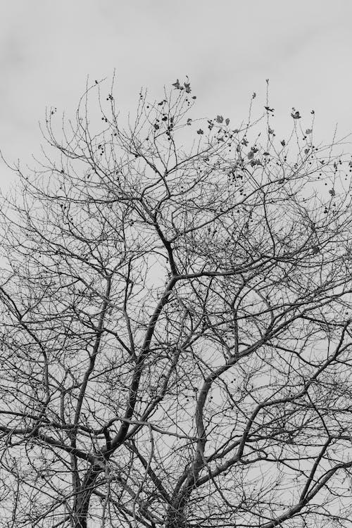 Ảnh lưu trữ miễn phí về bình minh, cây, chi nhánh, công viên