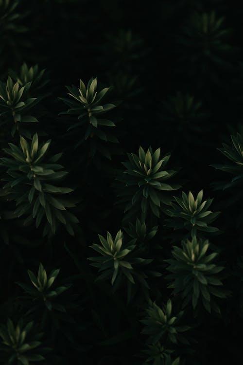 Ảnh lưu trữ miễn phí về cây, cây lá kim, gỗ, hệ thực vật