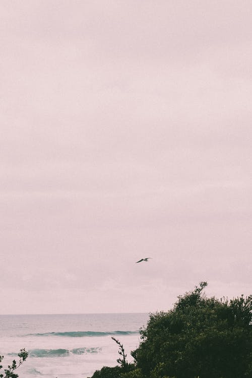 Free stock photo of beach, bird, daylight, flight