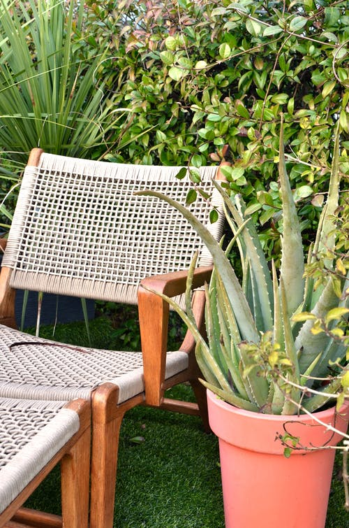 Deckchair placed on green lawn near lush tropical plants in backyard