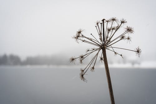 コールド, 冬, 外側の無料の写真素材