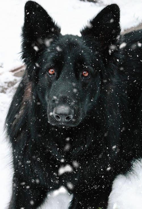 Black Short Coat Medium Dog on Snow Covered Ground