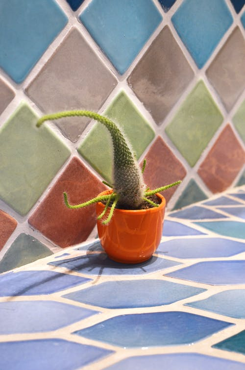 Prickly cactus growing in pot on tiled surface