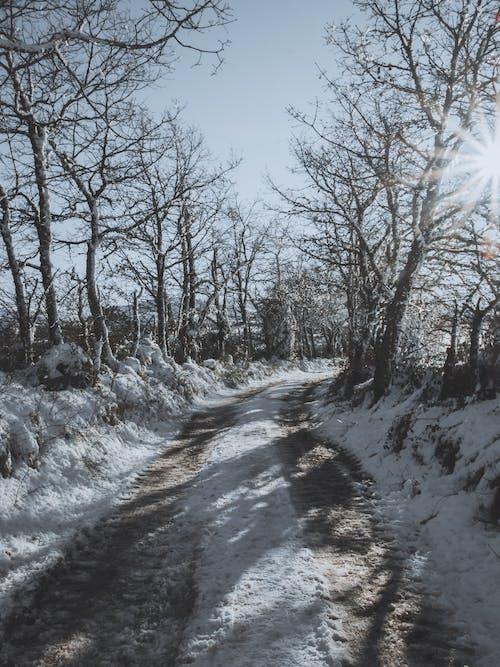 Foto stok gratis badai salju, beku, bimbingan