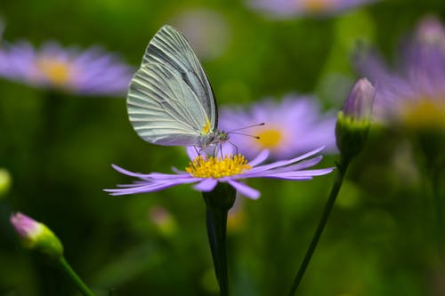 White Butterfly Perched on Purple Flower in Close Up Photography