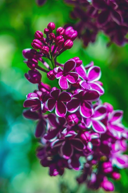 Ilmainen kuvapankkikuva tunnisteilla kasvikunta, kasvu, kaunis kukka