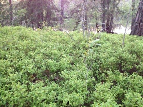 Immagine gratuita di natura, vegetazione verde