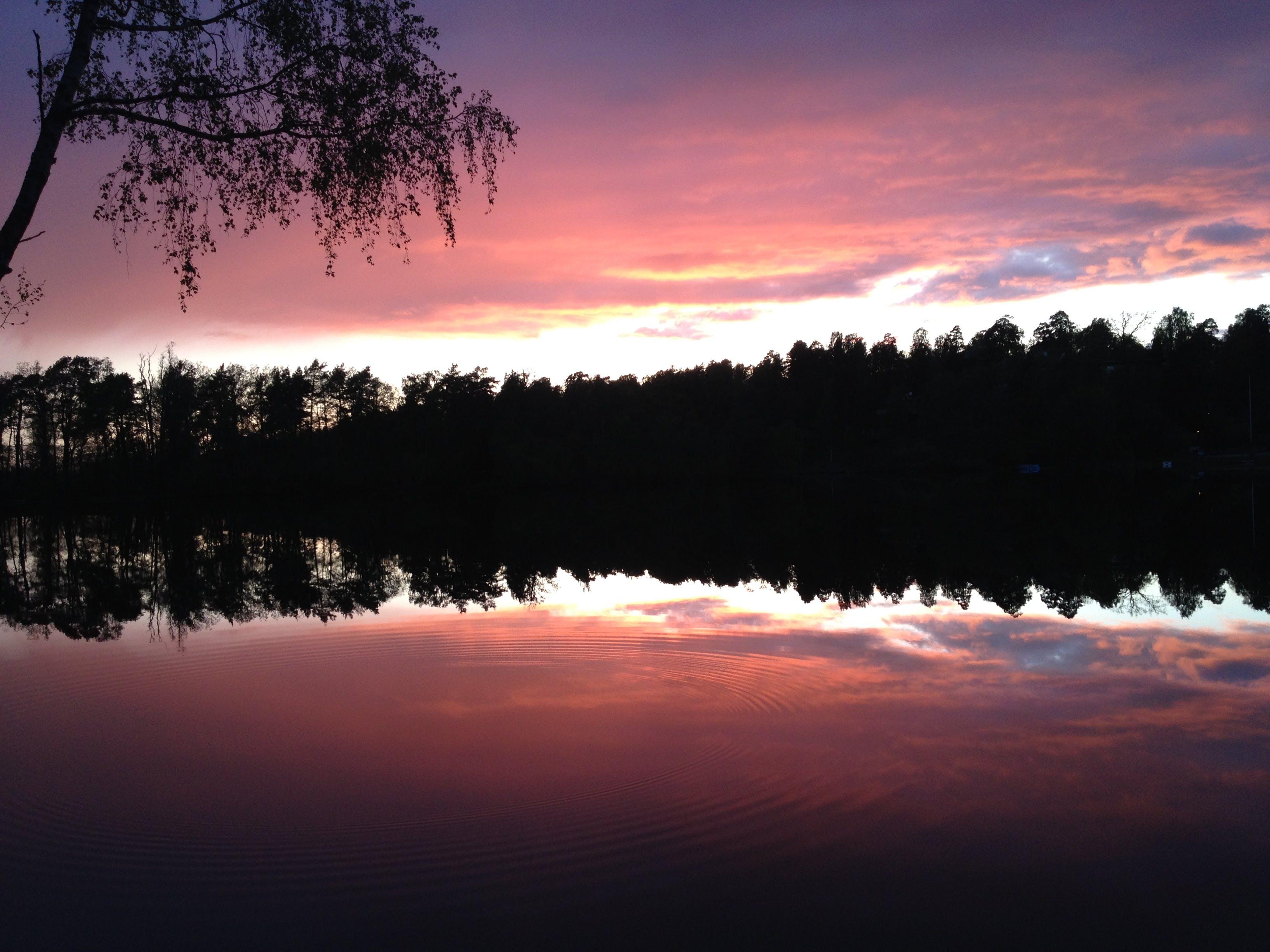 Free stock photo of reflections, sunset, treeline, water