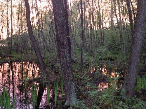 Immagine gratuita di acqua, alberi, riflessi, tramonto