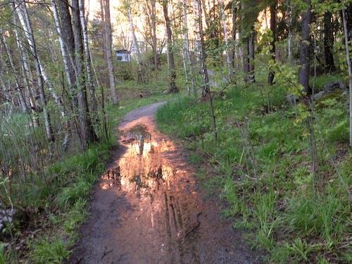 Immagine gratuita di acqua, alberi, riflessi, sentiero