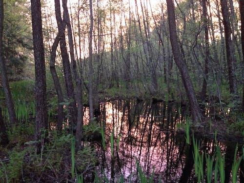 Immagine gratuita di acqua, riflessi, tramonto