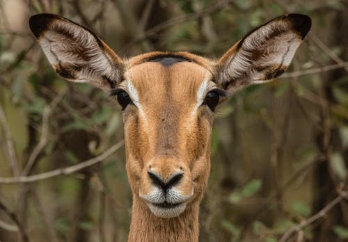 Cute wild deer with fluffy soft ears