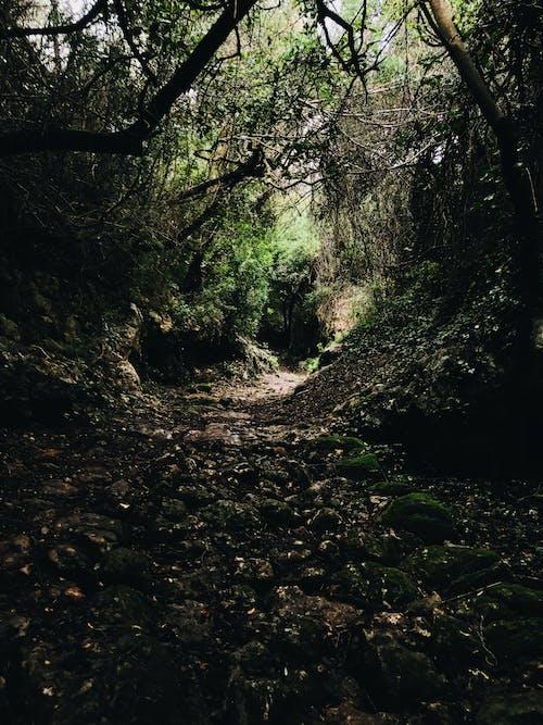 Foto stok gratis alam, alami, batu
