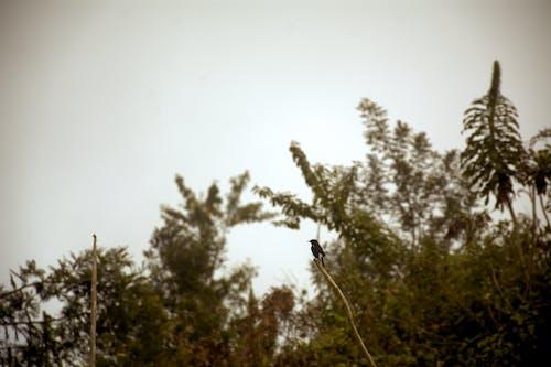 Foto d'estoc gratuïta de au, fotografia d'aus, fotografia de la vida salvatge