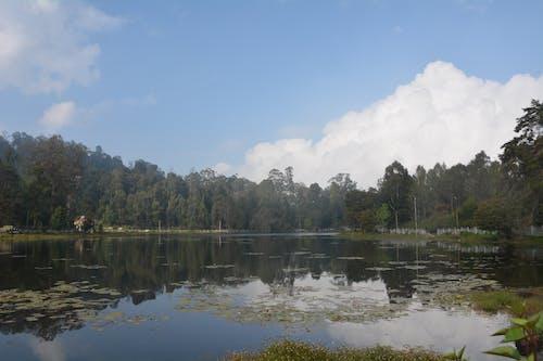 Foto d'estoc gratuïta de arbres, fotografia de natura, fotografia de paisatge