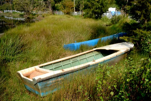 Free stock photo of boat, grass, india