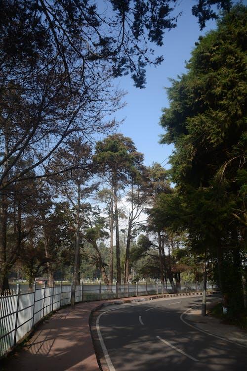 Foto d'estoc gratuïta de fotografia de carrer, fotografia de natura, fotografia de paisatge