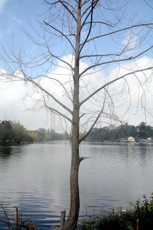 Foto d'estoc gratuïta de caure, fotografia de natura, fotografia de paisatge