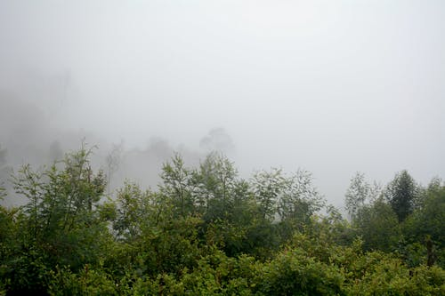 Foto d'estoc gratuïta de boira, fotografia de natura, fotografia de paisatge