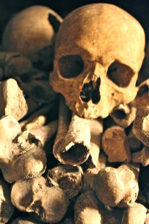 Photos gratuites de crâne, crânes, halloween