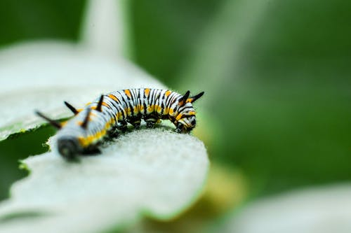 Free stock photo of animal, blur, butterfly