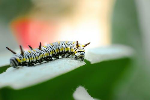 Free stock photo of animal, biology, blur
