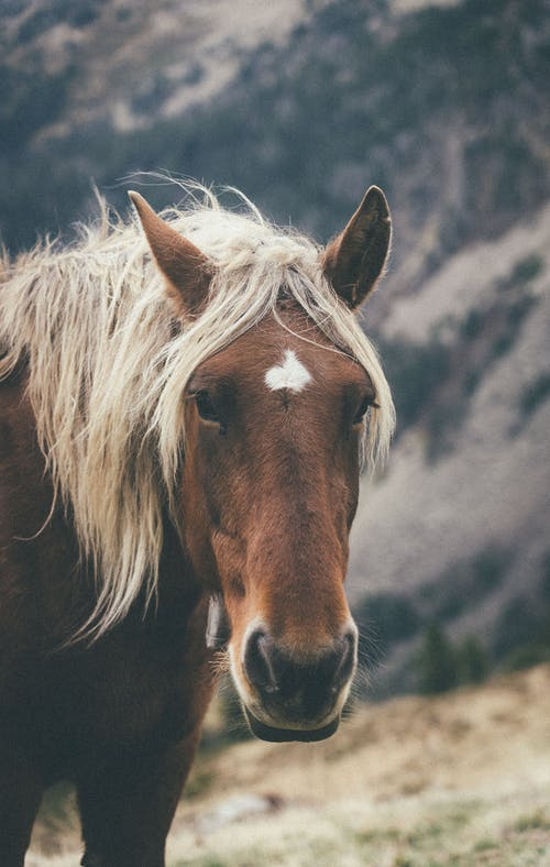 Graceful chestnut horse with flaxen mane pasturing on grassy hill slope near mountains in countryside