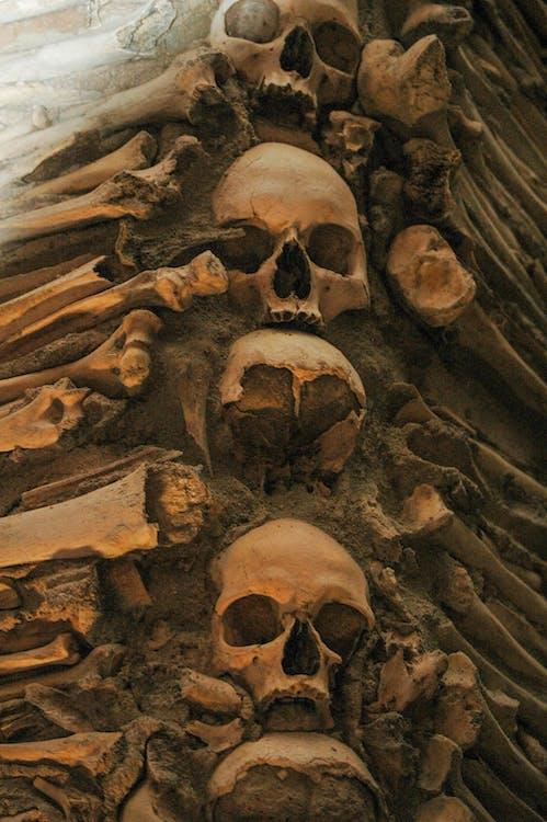 Darmowe zdjęcie z galerii z cmentarz, czaszka, czaszki