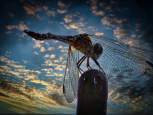 Fotos de stock gratuitas de mosca dragón