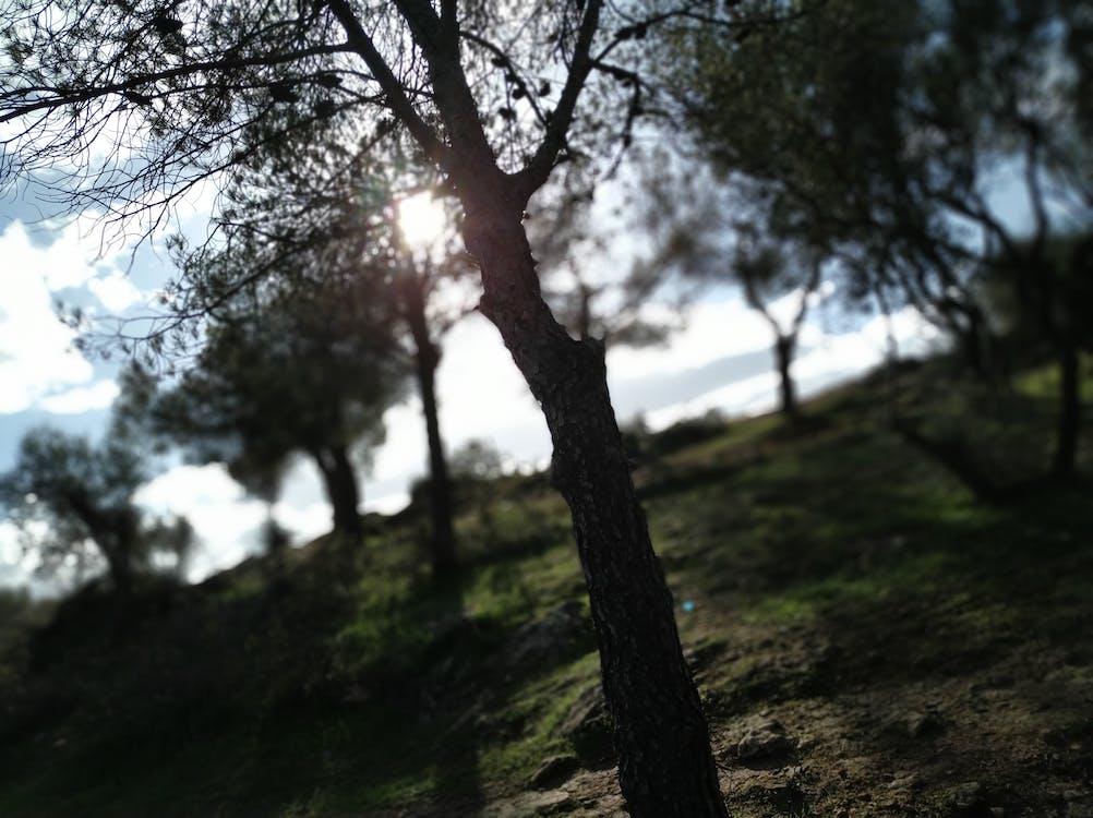 Free stock photo of light, morning, nature