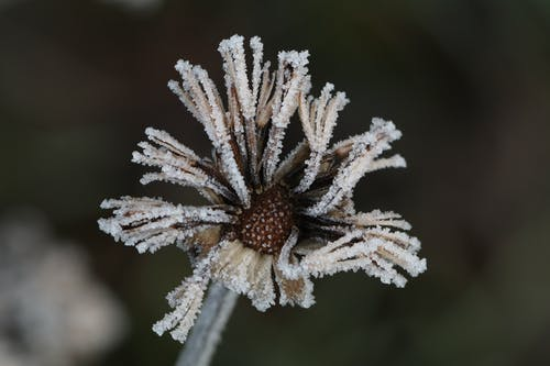 Fotos de stock gratuitas de flor congelada