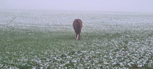 Free stock photo of field, fog, horse
