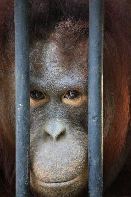Foto profissional grátis de ameaça, animais selvagens, animal
