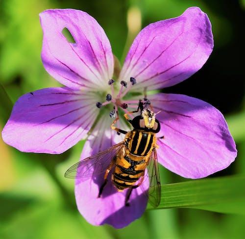 Fotos de stock gratuitas de abeja, animal, artrópodo