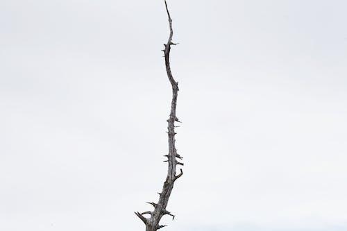Leafless Tree Under White Sky
