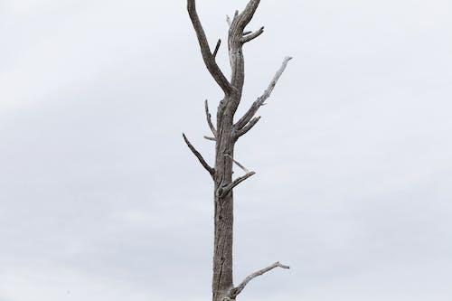 Brown Bare Tree Under White Sky