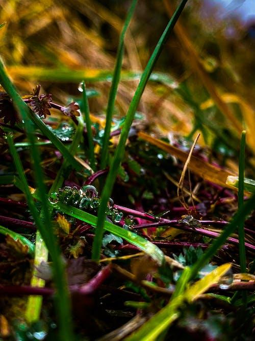 Free stock photo of beautiful nature, colors, dark green