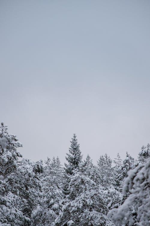 Free stock photo of sky, snow, sweden
