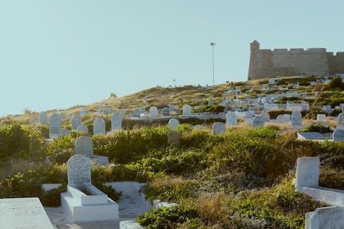 A Cemetery on a Grassy Field