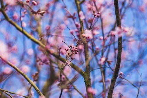 Immagine gratuita di albero, botanica, estate, fiore