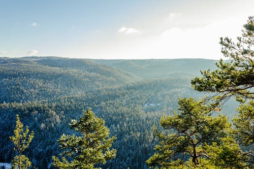 Green Trees on Mountain Under Blue Sky