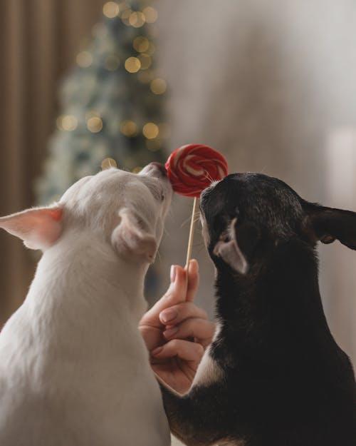 Foto profissional grátis de adulto, amor, animal