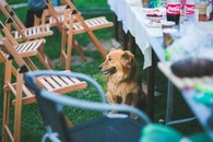 garden, party, animal