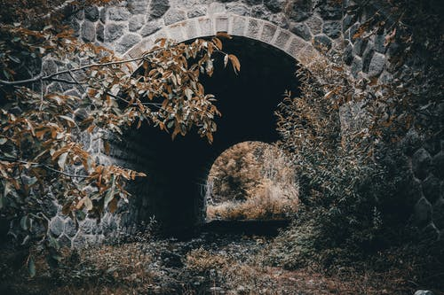 Arched stone bridge in autumn woods