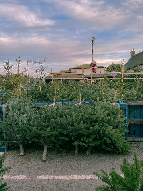 Free stock photo of agriculture, building, christmas tree
