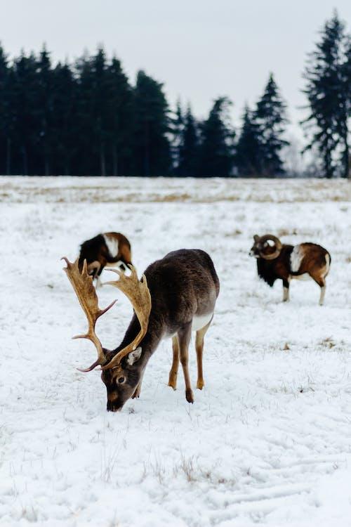 Immagine gratuita di all'aperto, animale, boschi, caccia