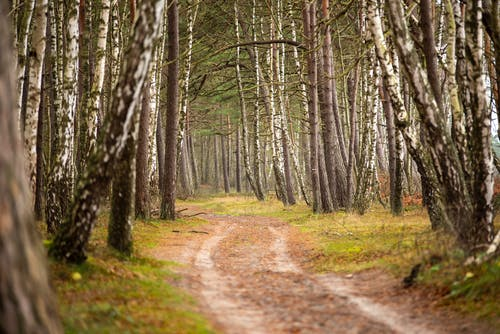 Narrow pathway in forest with leafless trees